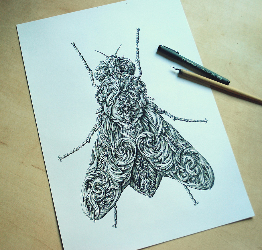 2. little-wings-insect-drawings-alex-konahin-3