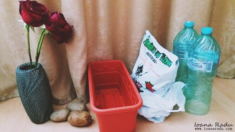 cum sa plantezi trandafiri foto 1