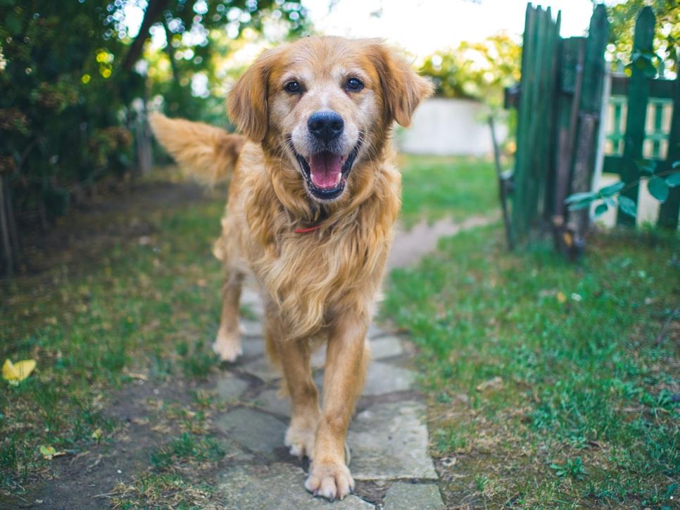 mâncare pentru câini | catel | dog