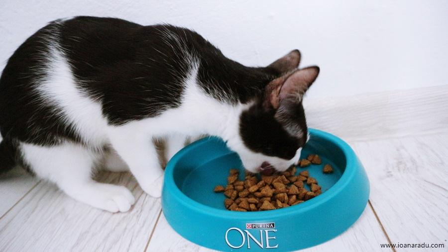 hrana uscata Purina One Bifensis pentru pisici