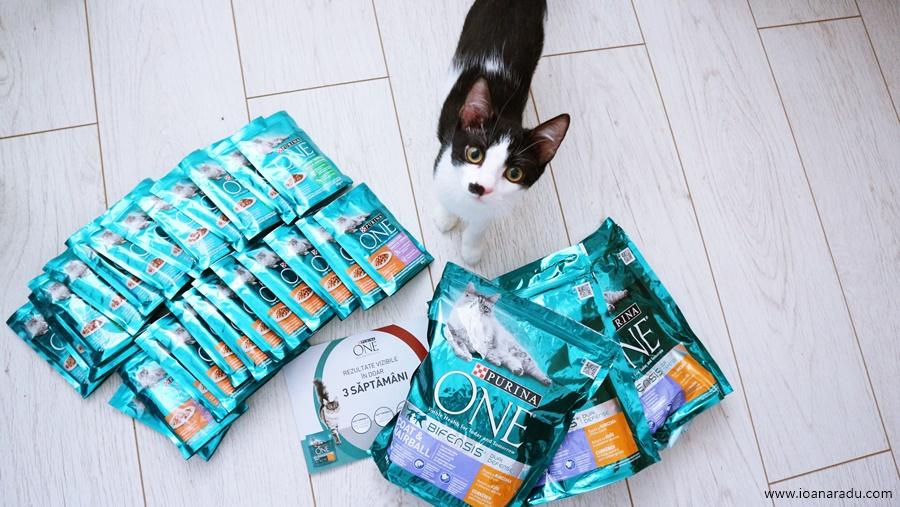 hrana uscata si hrana umeda Purina One Bifensis pentru pisici